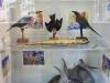 anansi-display-museum
