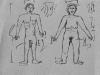 Human anatomy.