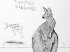 Springbok taunting Kangaroo.